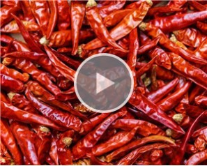 Dry Red Pepper/Chilli Sorting