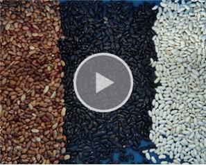 Kidney Beans Sorting